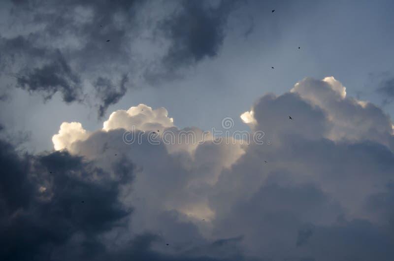 Hemel met vogel royalty-vrije stock afbeeldingen