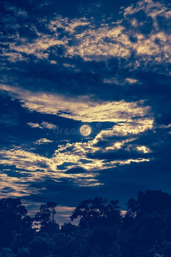 Hemel met wolken en maan boven silhouetten van bomen De achtergrond van de sereniteitsaard royalty-vrije stock afbeeldingen