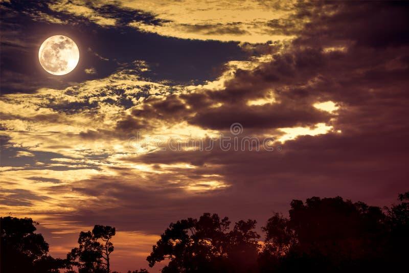 Hemel met wolken en maan boven silhouetten van bomen Sereniteitsna stock fotografie