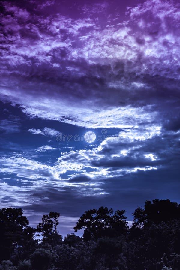 Hemel met wolken en maan boven silhouetten van bomen Sereniteitsna stock afbeeldingen