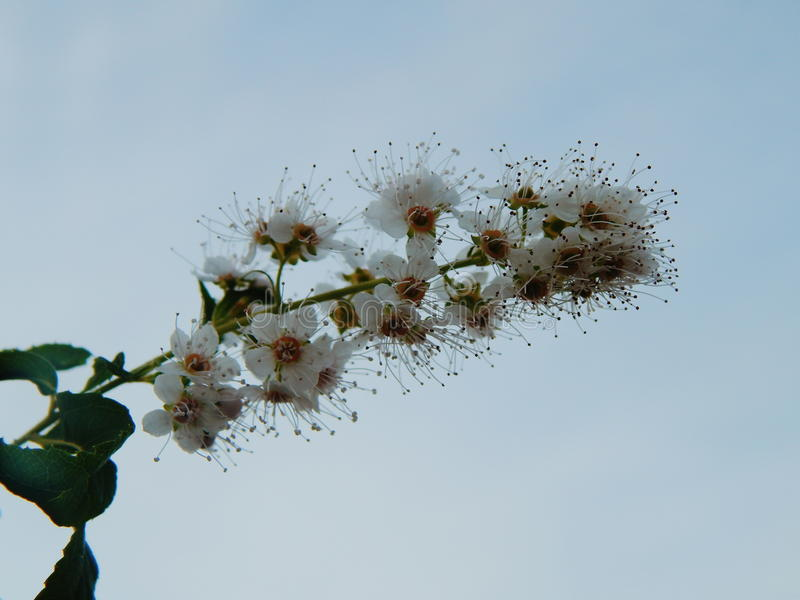 Hemelbloemen royalty-vrije stock fotografie