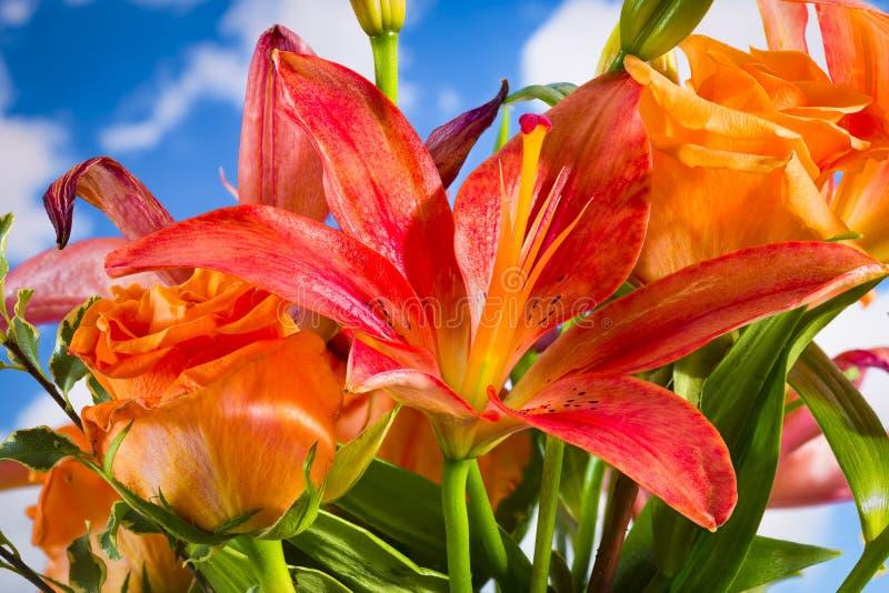 Hemerocallis e rosas alaranjadas fotografia de stock