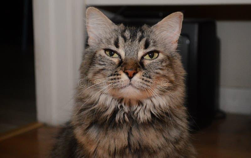 Hemhjälp cat arkivbild