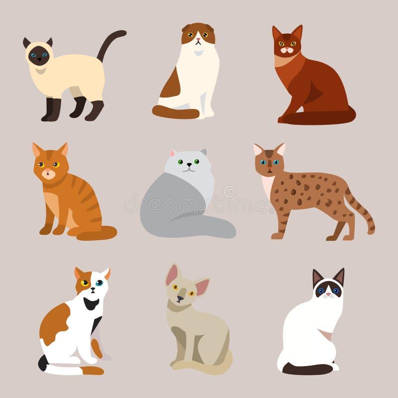 Hemhjälp för djur för tecknad film för gullig älsklings- stående för kattavel fluffig ung förtjusande katt- och för sammanträdedä royaltyfri illustrationer