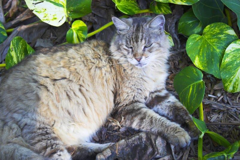 Download Hemingway cat stock image. Image of curled, sleeping - 16687473