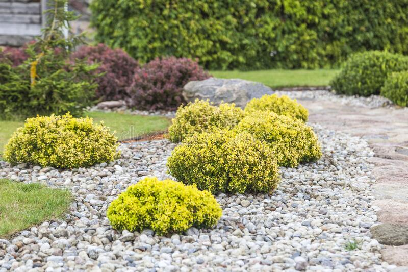 Hemispherical shrubs in landscaping. Countryside. Multi-colored shrubs in the garden,  landscaping royalty free stock images