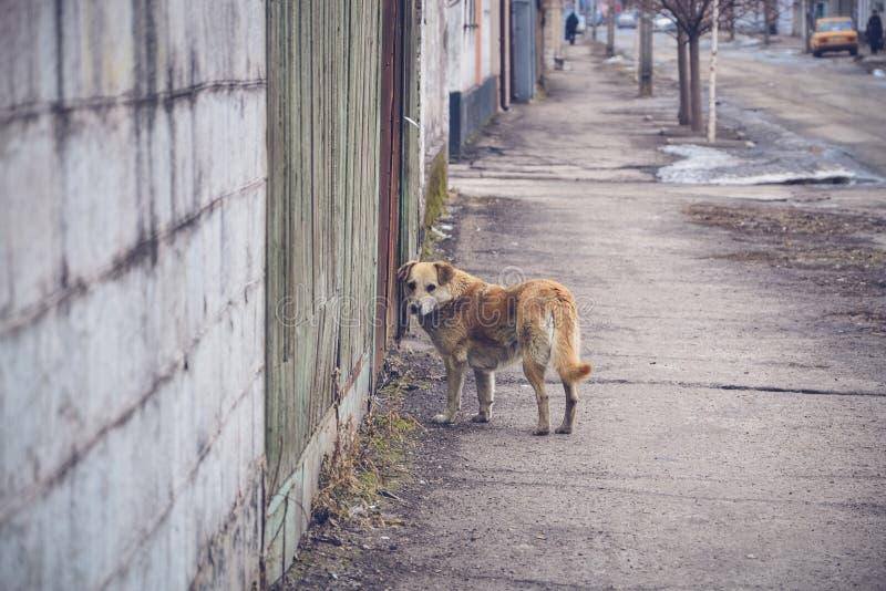 Hemlös hund på gatan i staden Ukraina royaltyfria bilder