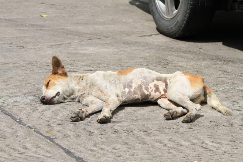 Hemlös hund på vägen arkivbilder