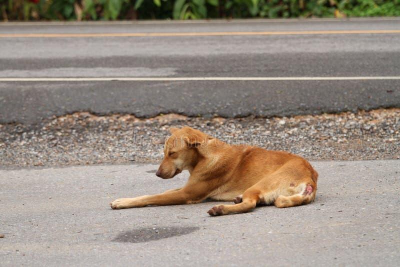 Hemlös hund, sjukligt och hungrigt royaltyfria foton