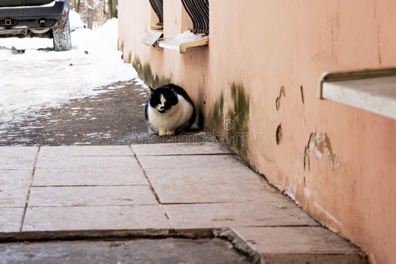 Hemlös katt på byggnaden i vinter royaltyfri fotografi