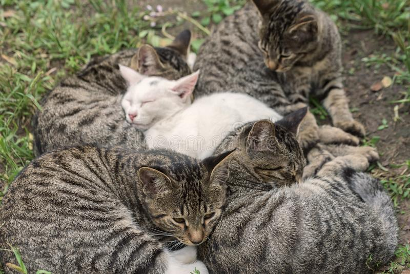 Hemlös kattsömn royaltyfri fotografi