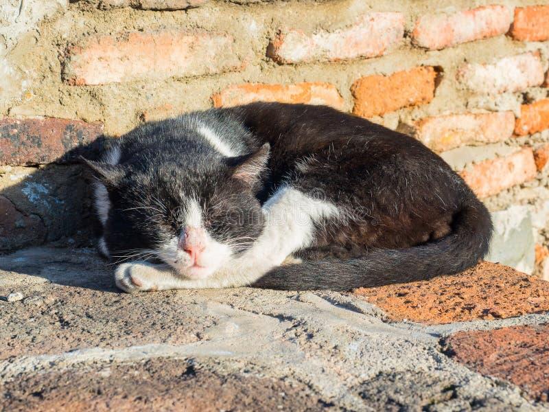 Hemlös svartvit katt som sover på tegelstenar och värma sig i solen royaltyfri fotografi