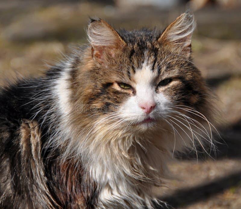 Hemlös tålmodig strimmig kattkatt royaltyfria foton