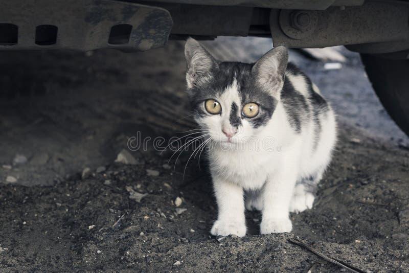Hemlösa djur Härlig vit och grå katt med ledsna ögon som ser, på den stads- gatan royaltyfri foto