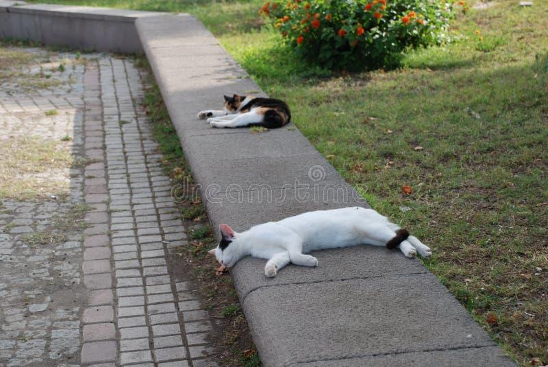 Hemlösa katter vilar under den ljusa solen i staden av Kemer i Turkiet royaltyfri bild
