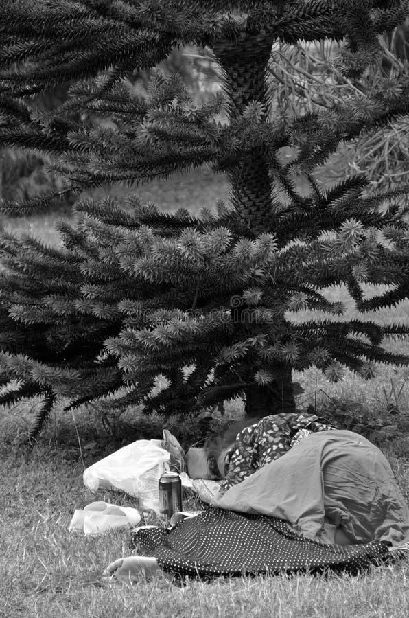 Hemlösa sömnar under trädet i att parkera arkivfoto