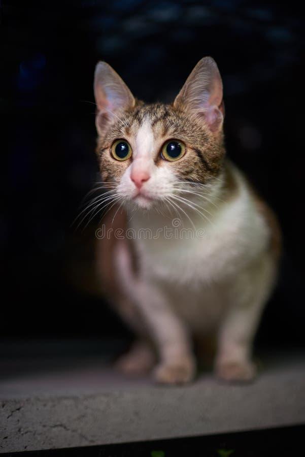 Heml?sa djur övergav kattungar, gulliga kattungar är att spela som ser kameran Djurskydd i en hemlös royaltyfri foto