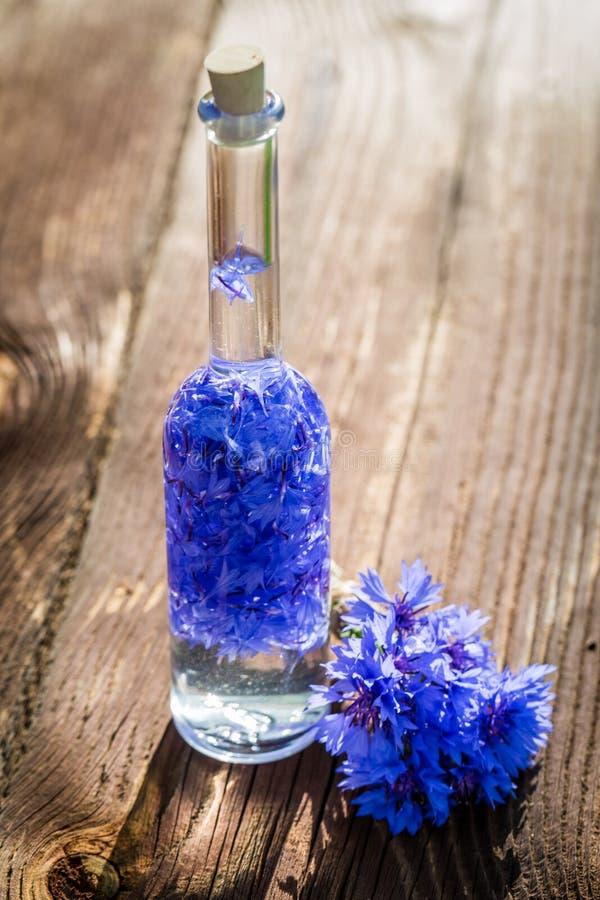 Hemlagad sund tinktur av blåklinter royaltyfri bild