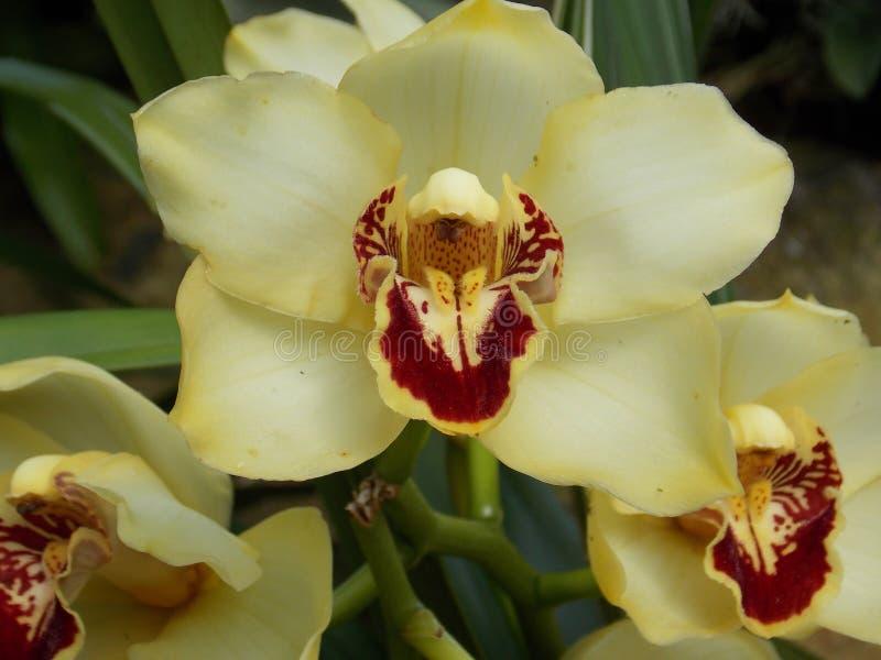 Hemlig tropisk trädgård royaltyfria bilder