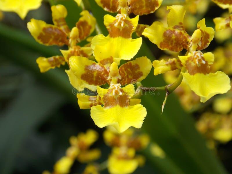 Hemlig tropisk trädgård arkivbild
