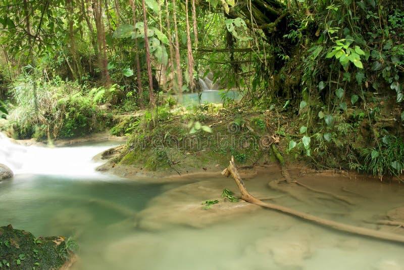 hemlighet för rainforest för aguaazulmexico pöl fotografering för bildbyråer