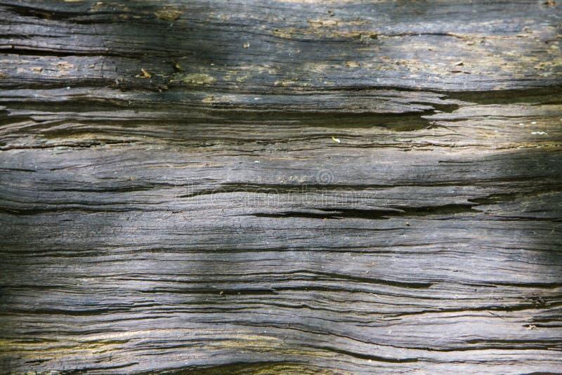 Hemligheter av ett gammalt träd som är stupat i skogen royaltyfri bild