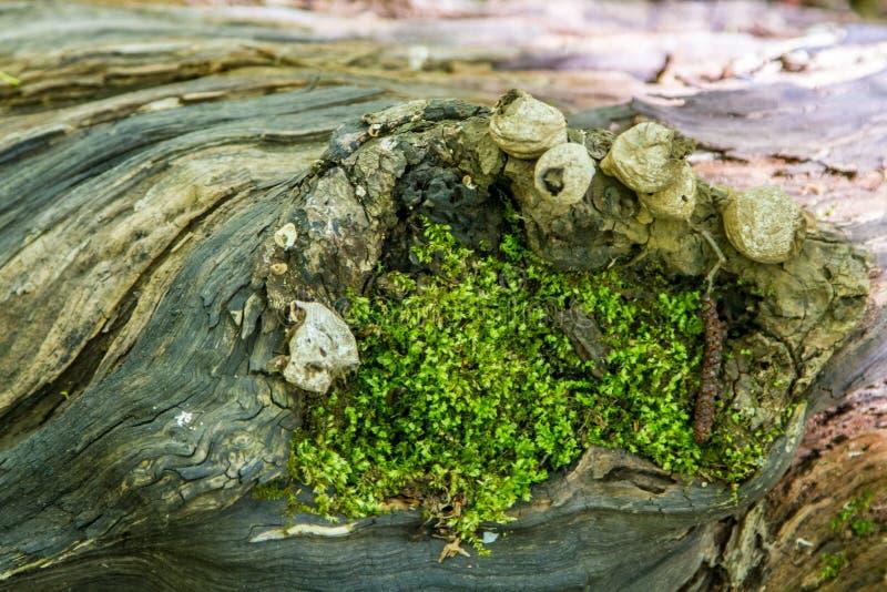Hemligheter av ett gammalt tr?d som ?r stupat i skogen arkivfoton