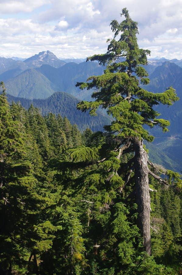 Hemlock горы стоковое изображение