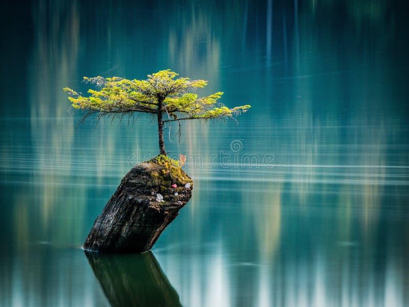 Hemlock, Fairy Lake royalty-vrije stock afbeeldingen
