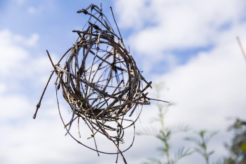 Hemmet gjorde Spheric för att fatta garneringar för hängande trädgård arkivfoto