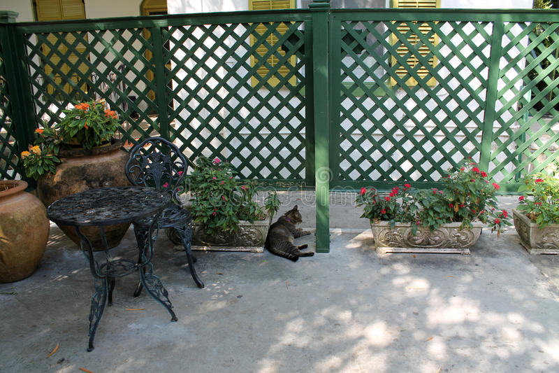 Hemmingway-Katze im Patio stockfoto