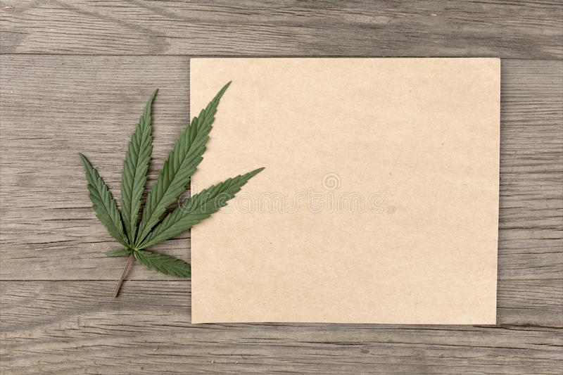 Hemp leaves and flowers with craft blank paper on old grunge wooden background. Top view. Minimalistic mockup. stock photography
