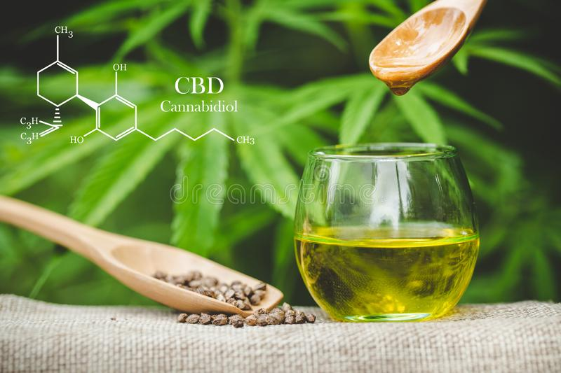 Hemp oil formula, CBD Cannabidiol in a glass bottle against Hemp plant with chemical molecule royalty free stock photo
