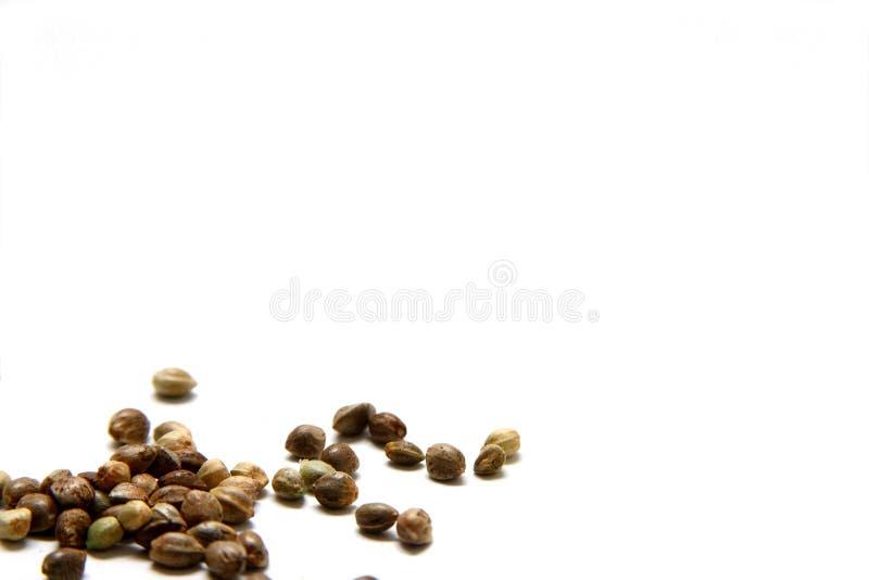 Hemp Seeds. Isolated shot of hemp seeds on white background stock images