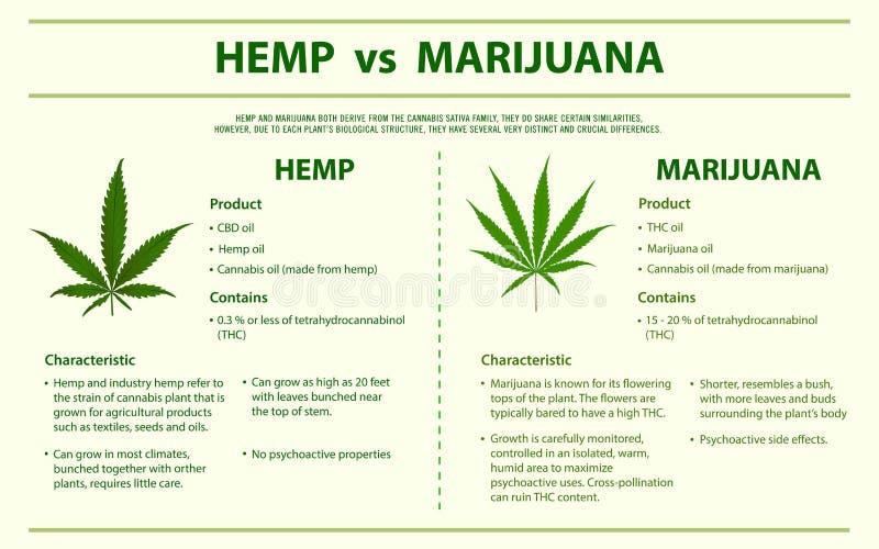 Hemp vs Marijuana horizontal infographic vector illustration