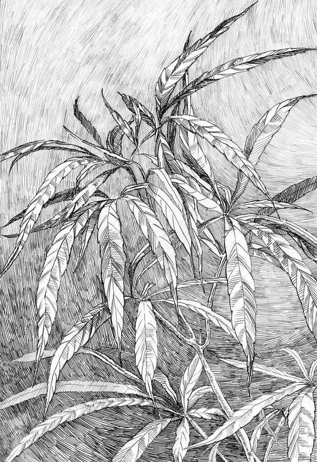 hempväxt stock illustrationer