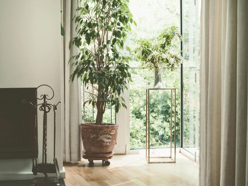 Hemtrevlig hemmiljödesign med husväxter på fönstret för vardagsrumsofa för vinkelformig matställe inre vagn arkivbilder