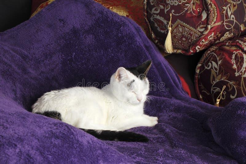 Hemtrevliga Cat Kitty Napping Happy arkivbilder