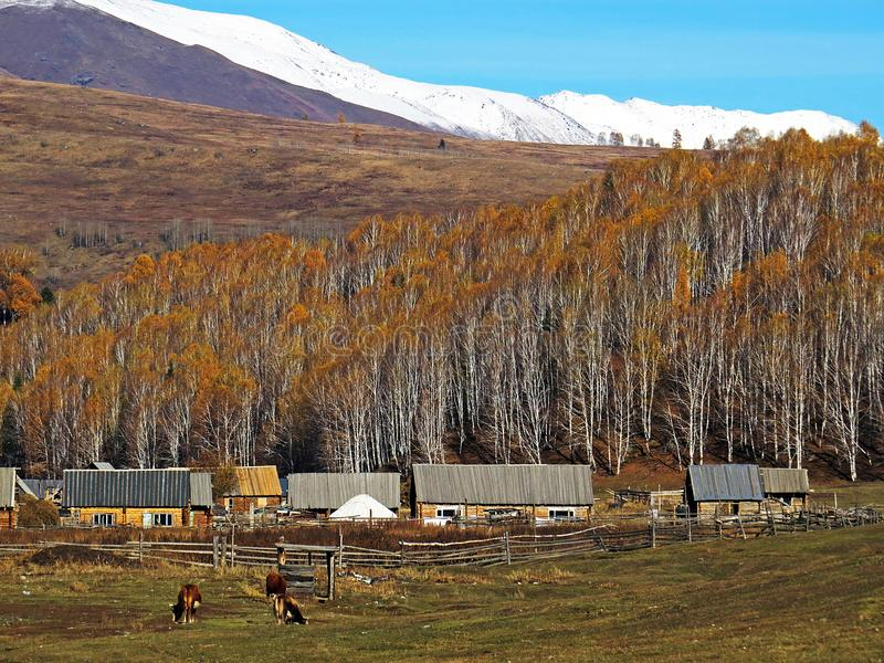 Hemu village in Xinjiang, China. Located within the Kanas Lake scenic area in the north of China`s Xinjiang Uygur autonomous region, Hemu is a rather primitive stock photo