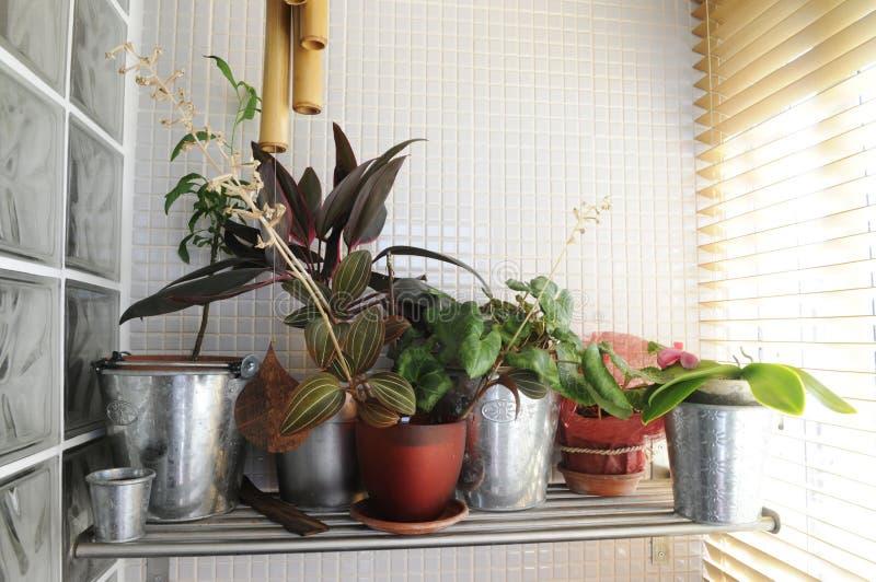Hemväxter vid fönstret royaltyfri fotografi