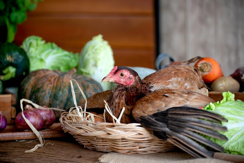 Hen in basket with eggs among the various types of vegetable on table in the kitchen.  royalty free stock photo