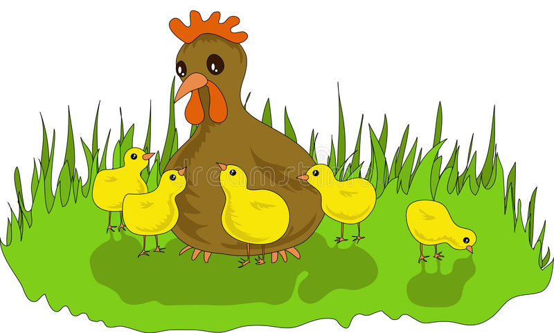 Hen with Chickens royalty free stock image
