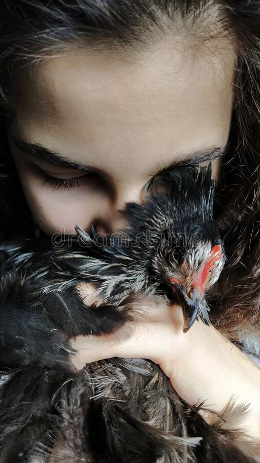Hen and child stock photography