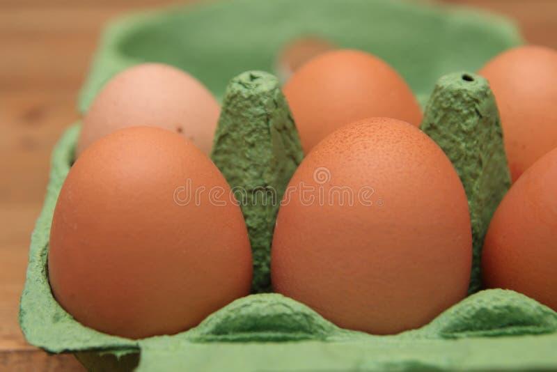 Hen& x27 de Brown; s eggs en un cartón o una caja reciclable verde, profundidad del campo baja imagenes de archivo