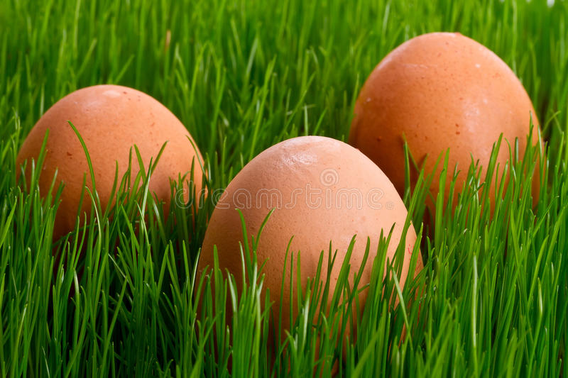 Hen Eggs In The Grass Royalty Free Stock Images