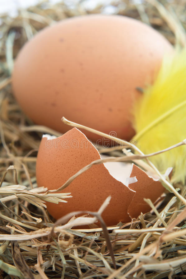 Download Hen's Nest - Vertical Orientation Royalty Free Stock Photo - Image: 18695075