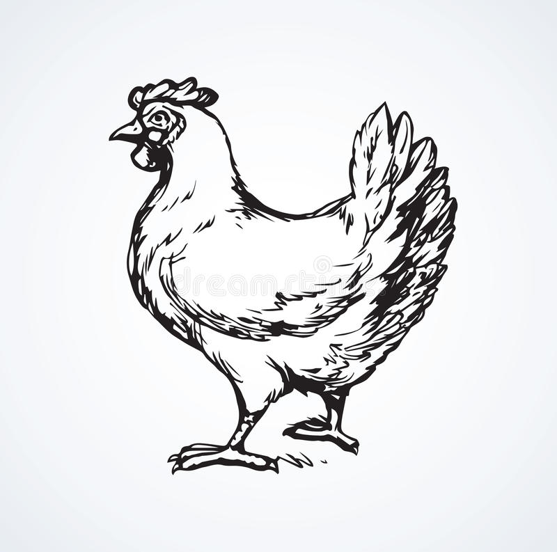 Hen. Vector drawing vector illustration