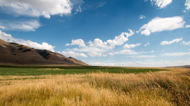 Henar de la alfalfa y campo de trigo debajo de las nubes de cúmulo en Wyoming fotos de archivo