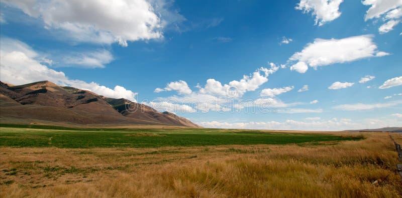 Henar de la alfalfa y campo de trigo debajo de las nubes de cúmulo en Wyoming foto de archivo