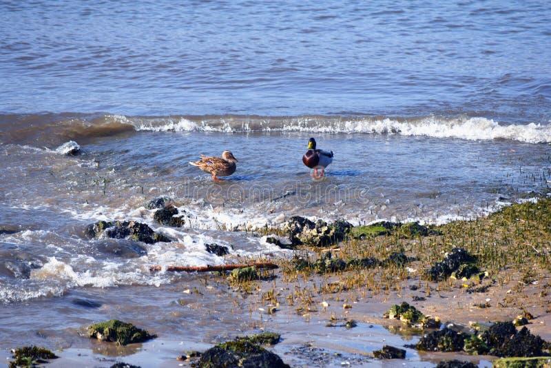 Hendaye Francja nurkuje na plaży na letnim dniu fotografia stock